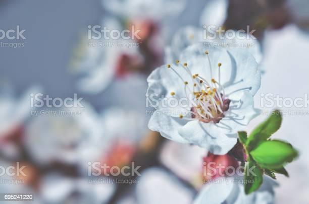 Flowers picture id695241220?b=1&k=6&m=695241220&s=612x612&h=ajikg3nszqkxkijwk19kexb8m72ngop3pivku0wo fw=