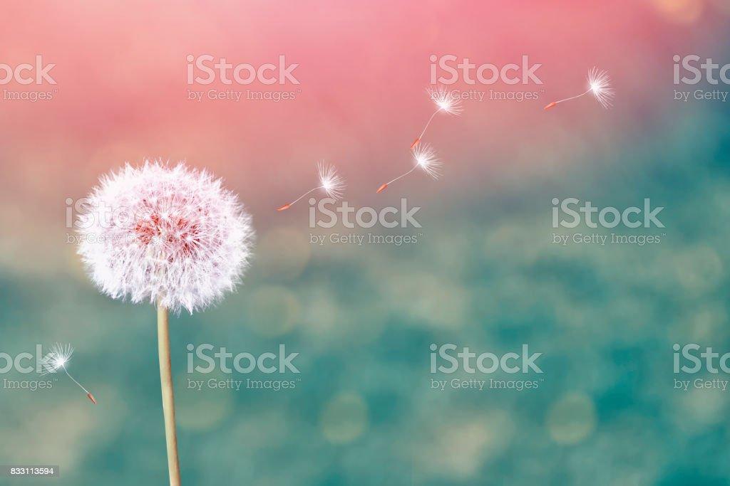 fleurs - Photo