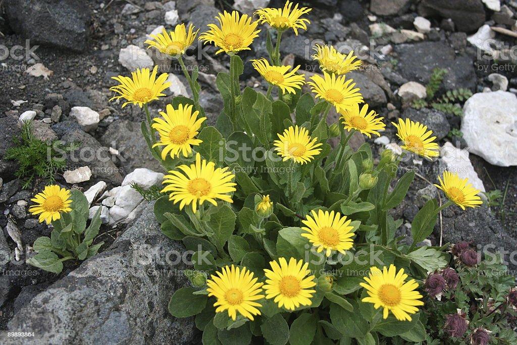 Цветы Стоковые фото Стоковая фотография