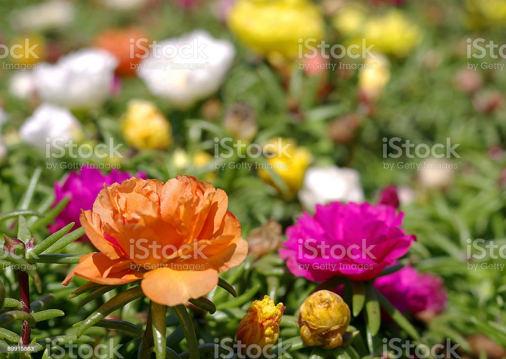 Flores foto de stock royalty-free