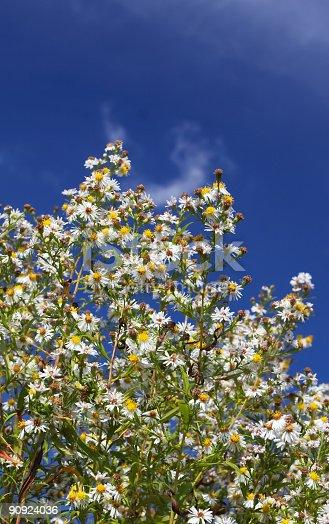istock Flowers 90924036