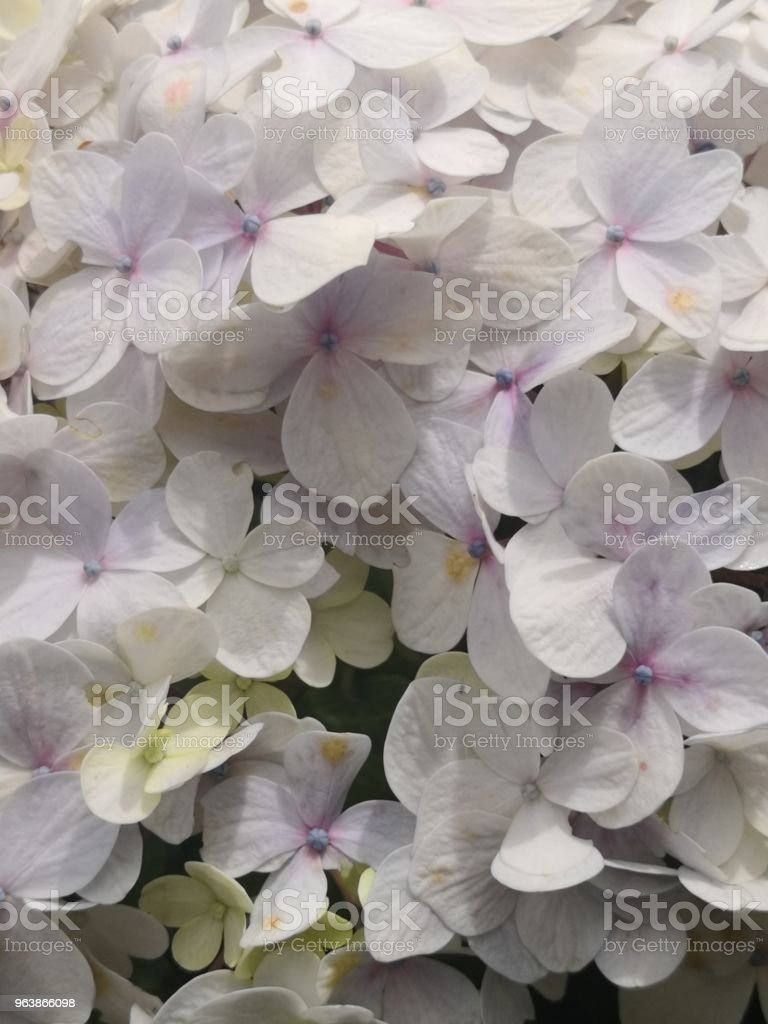 Flowers - Royalty-free Beauty In Nature Stock Photo