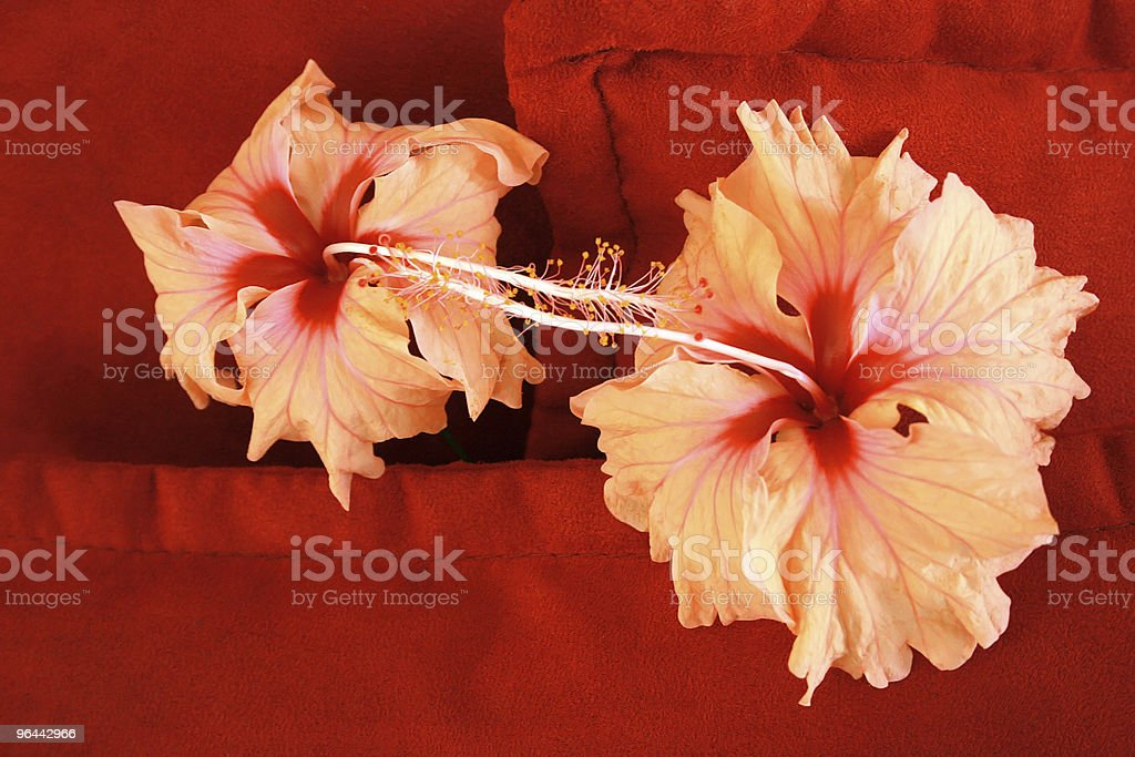 Flores - Foto de stock de Almofada royalty-free