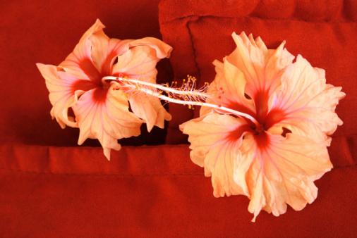 Foto de Flores e mais fotos de stock de Almofada