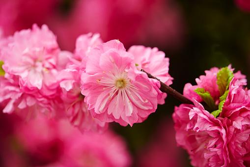 Bloemen Stockfoto en meer beelden van Bloem - Plant