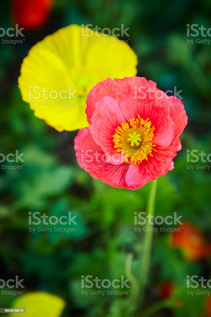 Flowers - Royalty-free Beauty Stock Photo