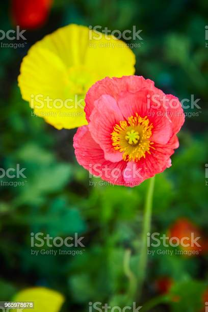 Flowers Stock Photo - Download Image Now