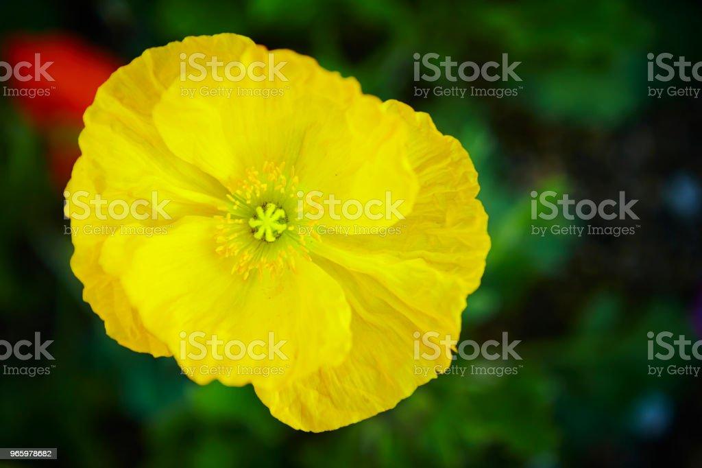 Bloemen - Royalty-free Bloem - Plant Stockfoto
