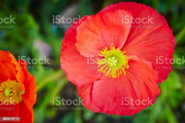 Blommor-foton och fler bilder på Blomkorg - Blomdel