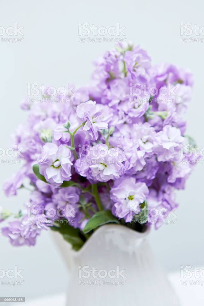 Blumen - Lizenzfrei Baumblüte Stock-Foto