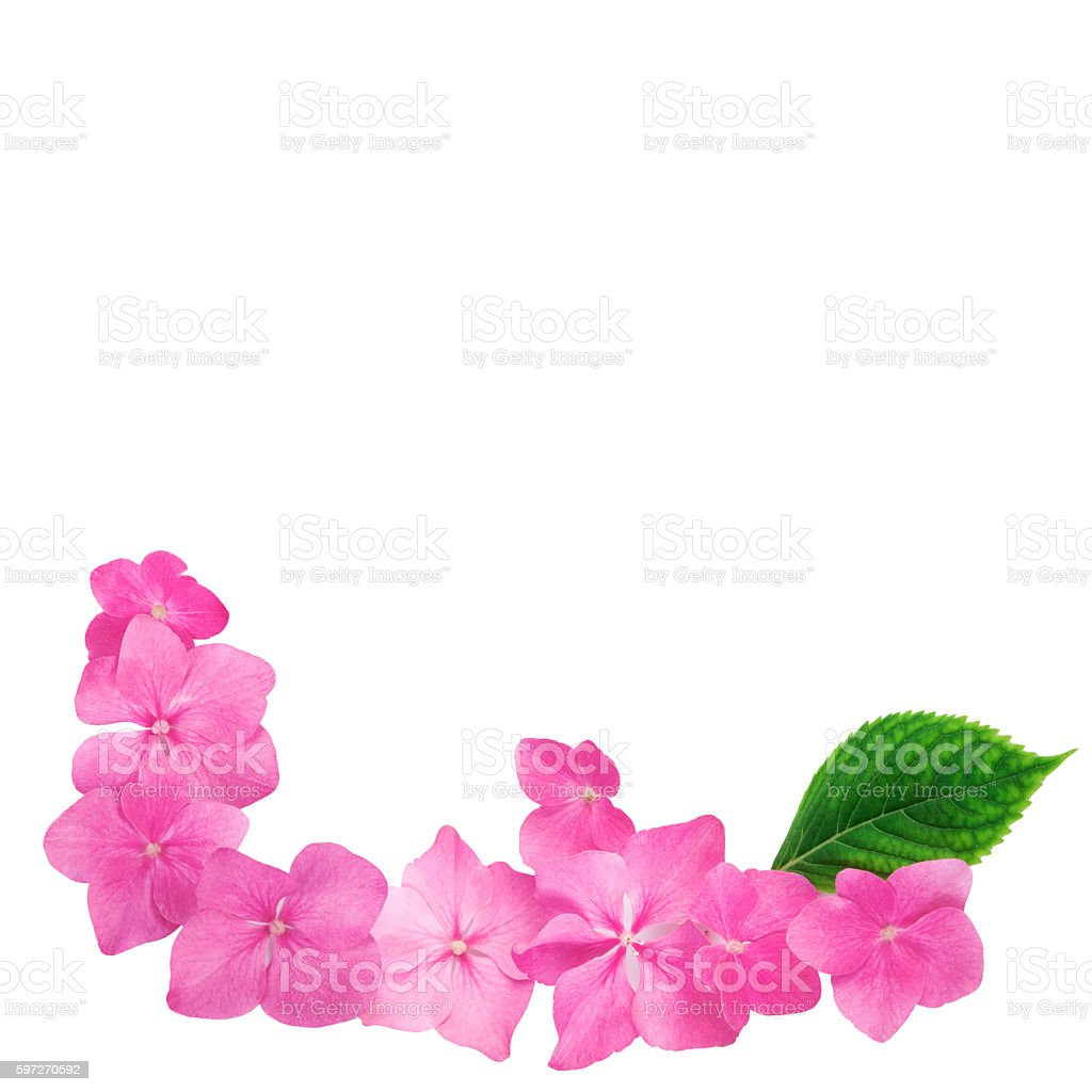 Flowers pink on white background, flat lay Lizenzfreies stock-foto