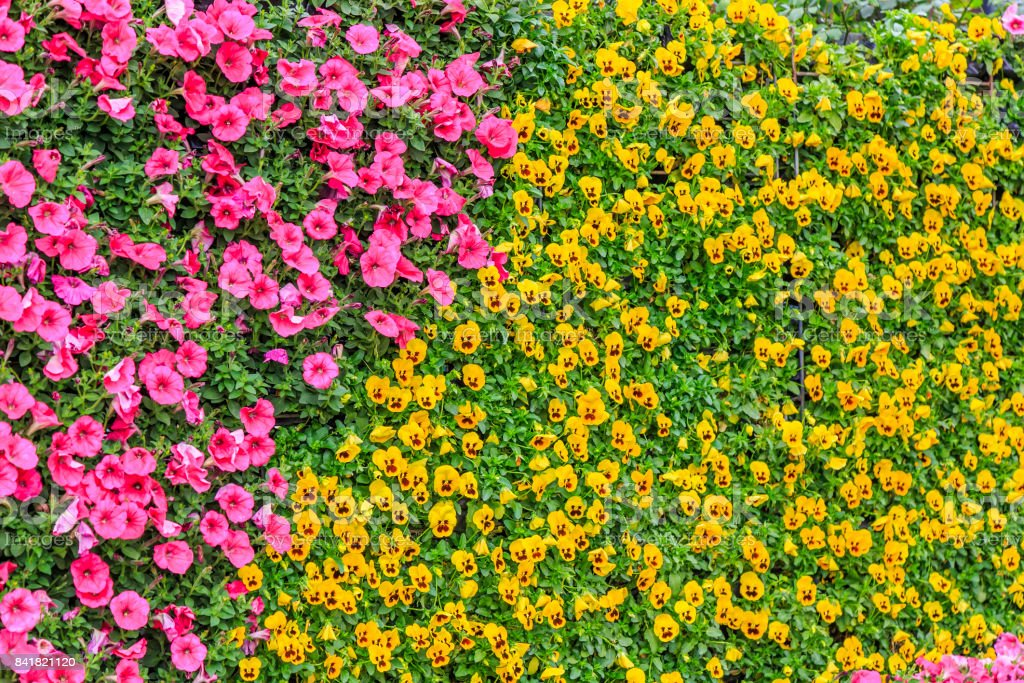 Flowers plant wall stock photo