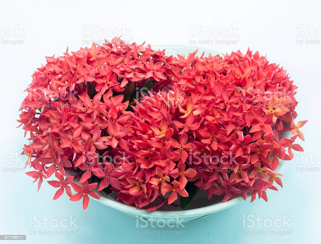 Flowers Red stock photo