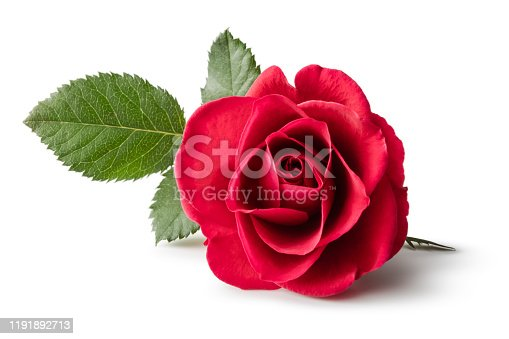 istock Flowers: Red Rose Isolated on White Background 1191892713