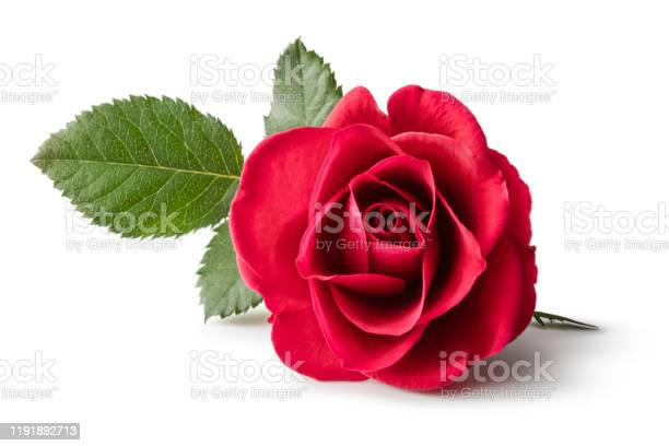 Flowers red rose isolated on white background picture id1191892713?b=1&k=6&m=1191892713&s=612x612&h=bsnw7wcgfsu4rq054 l7tw16jbdik5qwj5yel53dxwm=