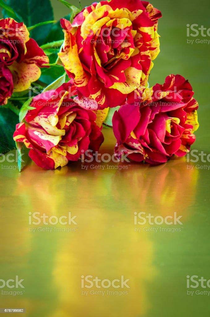 flowers roses photo libre de droits