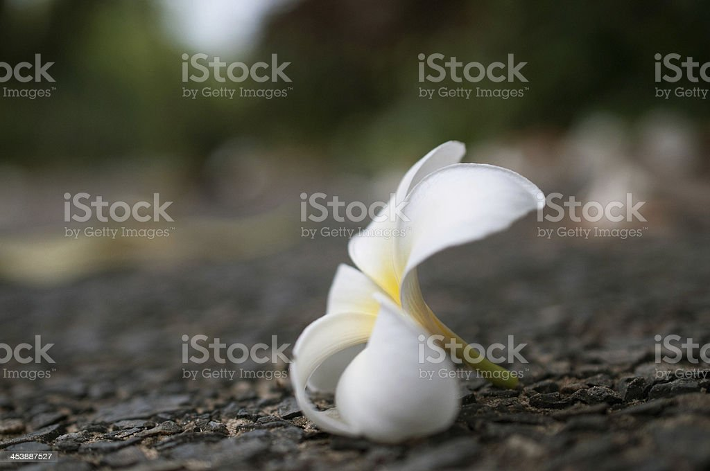 Flowers s royalty-free stock photo