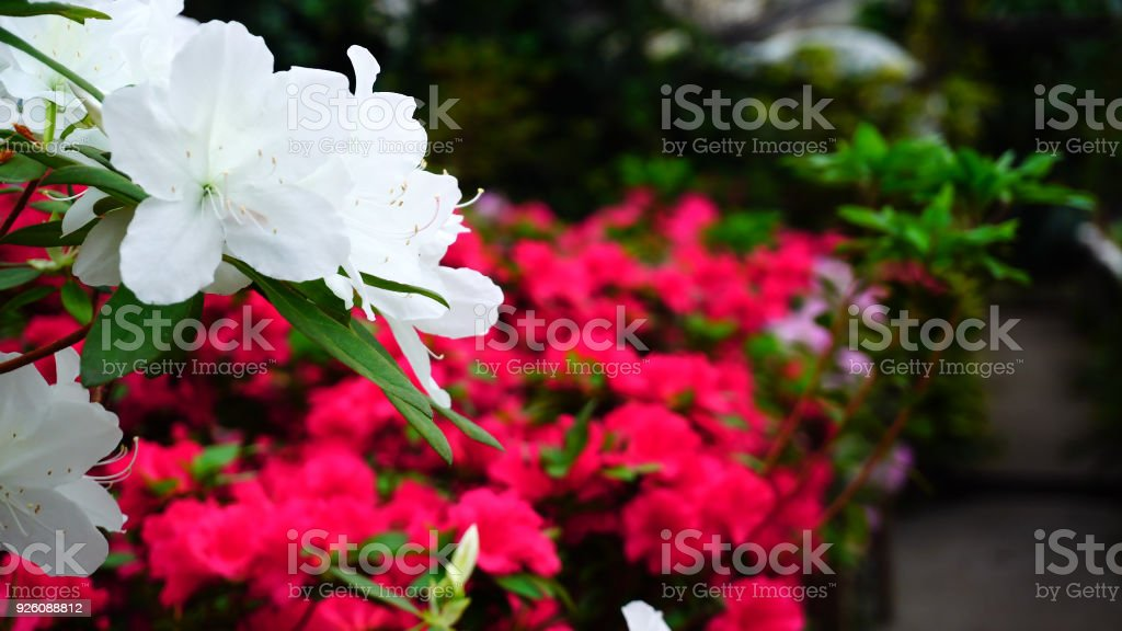 Flowers stand in shop-window, close-up photography stock photo