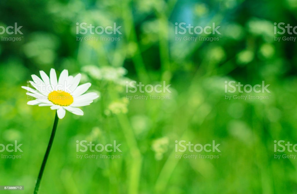 flowers summer South field stock photo