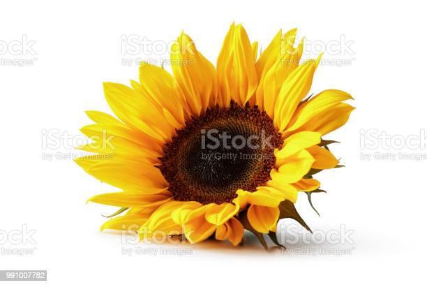 Photo of Flowers: Sunflower Isolated on White Background