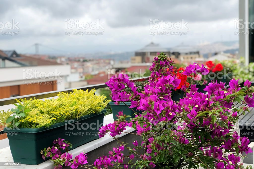 flowers that decorate the balcony in the background of istanbul and cloud scenery stock photo
