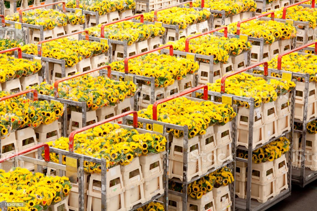 Flowers transported for delivery royalty-free stock photo