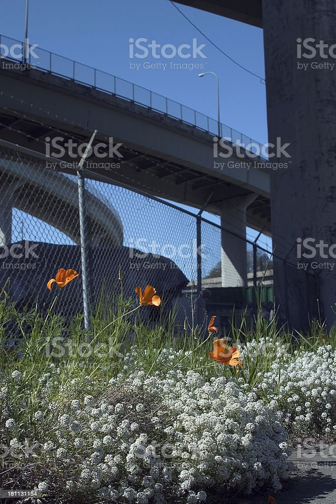 Flowers under the Freemont stock photo
