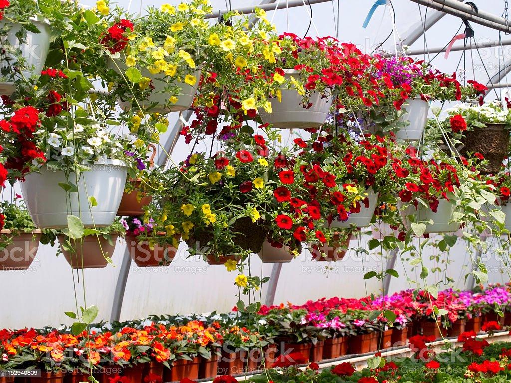 Hängende Blumenkörbe – Foto