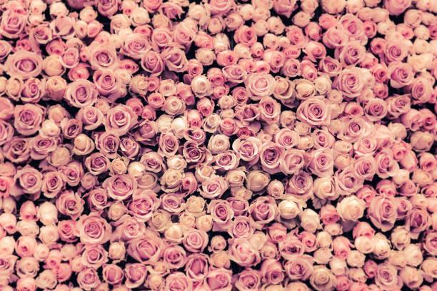 Flowers wall background with amazing roses picture id653267930?b=1&k=6&m=653267930&s=612x612&w=0&h=dywg0kd7hnrsvylllunbma8t76nkwm05nhmpfe1okaw=