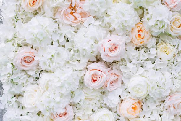 Flowers wall background with white and light orange roses picture id1165401791?b=1&k=6&m=1165401791&s=612x612&w=0&h=uodmruzwc2qfgewb4tcsrhzsqmhtu730 pt2g6pv eq=