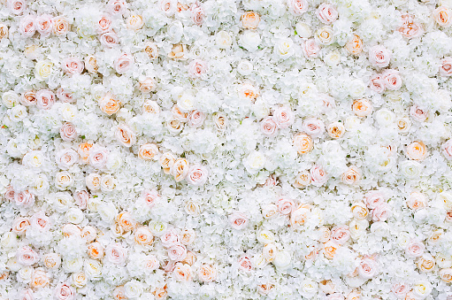 Flowers wall background with white and light orange roses.