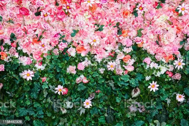 Flowers wall picture id1158492326?b=1&k=6&m=1158492326&s=612x612&h=tn0nhdohzanccg4zxgvdolijro2 o9qqb6ivdnaaixe=