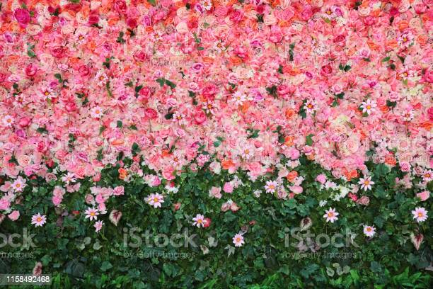 Flowers wall picture id1158492468?b=1&k=6&m=1158492468&s=612x612&h=ywthwhnmrsrehwxa dkzv 3qnqrlwgrhmsqxzlzeazi=