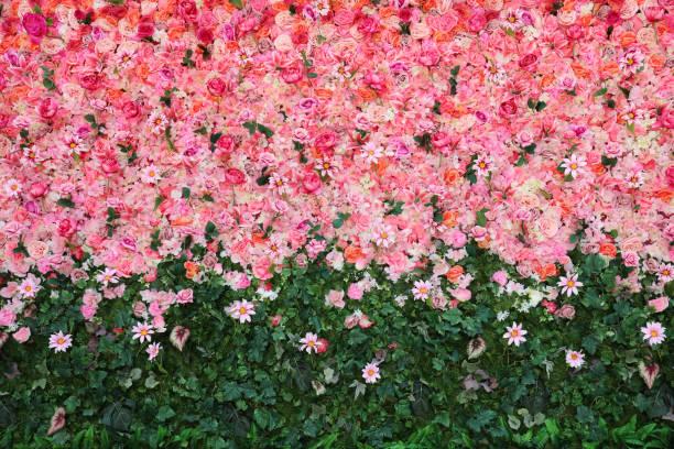 Flowers wall picture id1158492468?b=1&k=6&m=1158492468&s=612x612&w=0&h=8s 3kt2og2lbkremjc0uutwbn6hxqo5hi4ah q3jilm=
