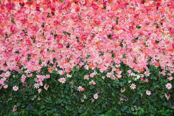 Flowers wall Flowers wall rose flower stock pictures, royalty-free photos & images