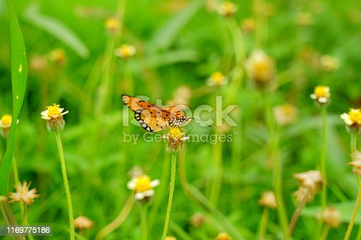 Summer, Flower, Agricultural Field, Chamomile Plant, Daisy