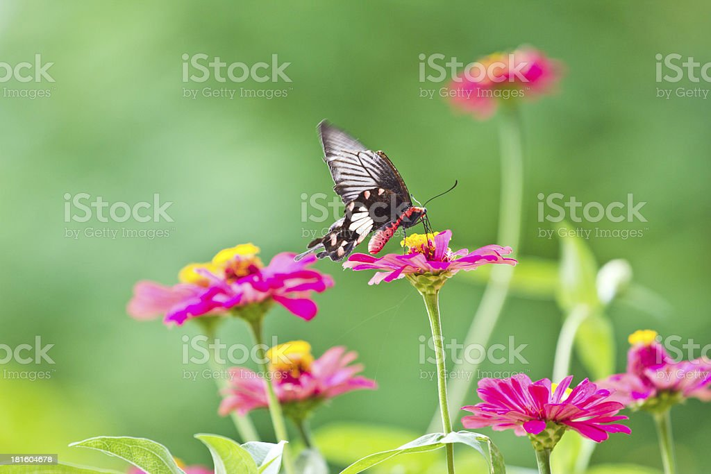 Flowers with butterflies royalty-free stock photo