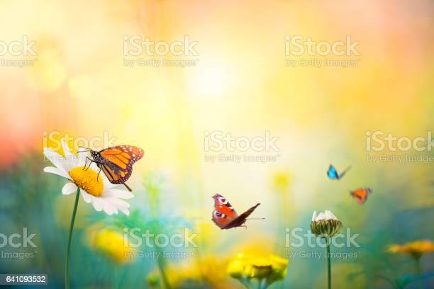 Flowers with butterflies picture id641093532?b=1&k=6&m=641093532&s=612x612&h=343dias3srzxloh6mhcvynmuhw3spawvotqcpugc4j0=