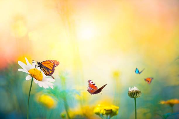 flores com borboletas - borboleta - fotografias e filmes do acervo
