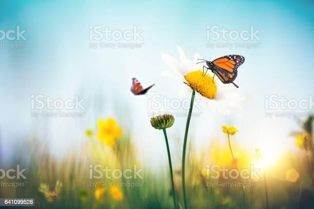 Flowers with butterflies picture id641099526?b=1&k=6&m=641099526&s=612x612&h=lpcni0ibsc7gs1m5pzcb18a7ihkq5ofntpgmqsekdto=