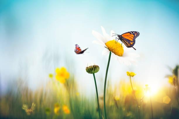 Flores con mariposas - foto de stock