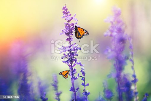 Summer meadow with monarch butterflies.
