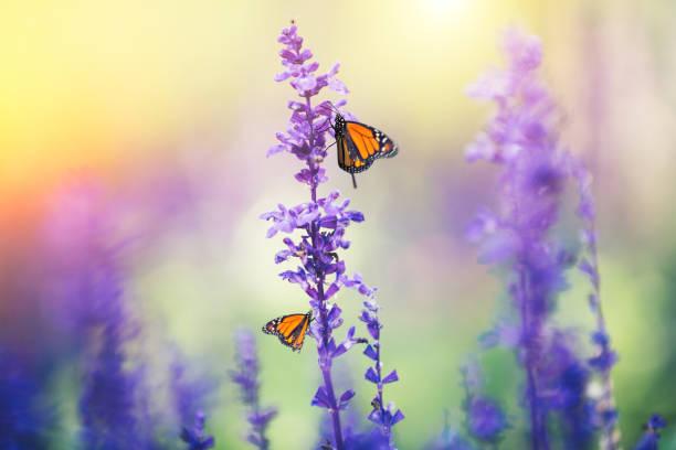 Flowers with butterflies picture id641099690?b=1&k=6&m=641099690&s=612x612&w=0&h=nzurc gbfcea8qwip0cuzrosdmr9csfx3orqn26rehu=