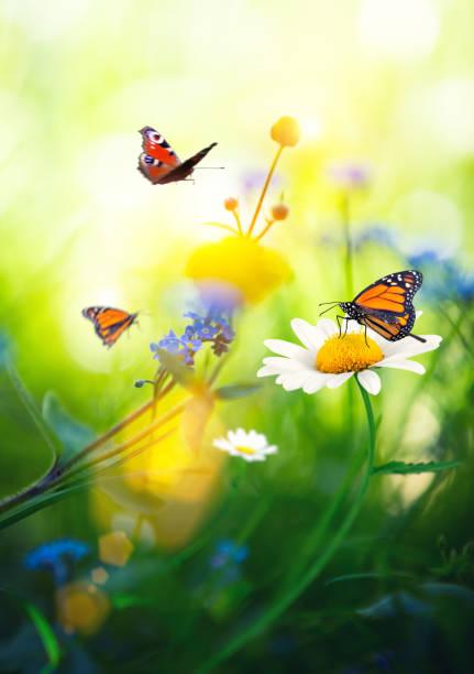 Flowers with butterflies picture id641099826?b=1&k=6&m=641099826&s=612x612&w=0&h=tuvnkuyxcj7je srflpo4vrkbldhop30fyd hlkw3l4=