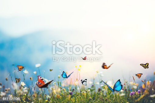 Mountain meadow with butterflies.