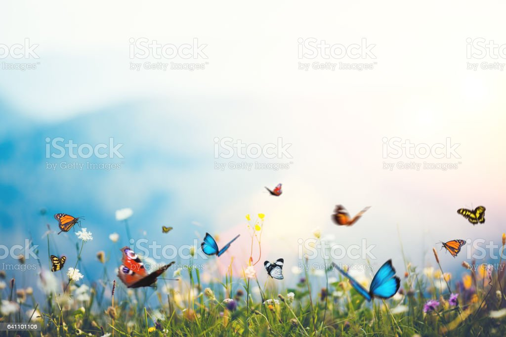 Flowers With Butterflies stock photo