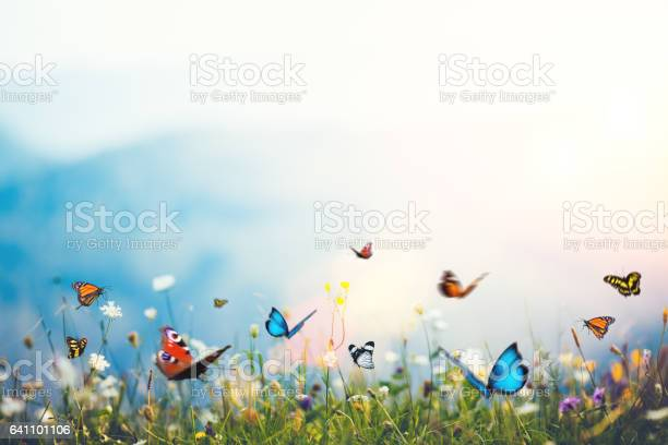 Photo of Flowers With Butterflies