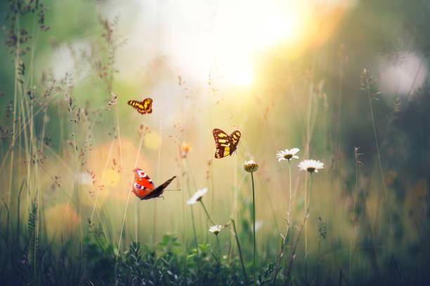 Flowers with butterflies picture id641101372?b=1&k=6&m=641101372&s=612x612&w=0&h= ay9r l2somuruus ffgsw5okfepsmpb4lpclmttvx0=