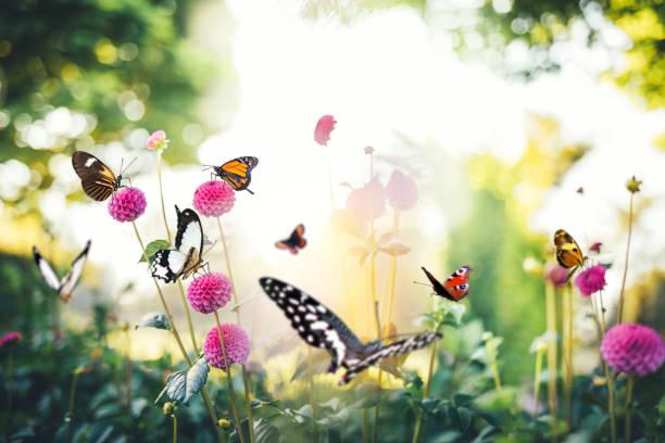 Flowers with butterflies picture id908525144?b=1&k=6&m=908525144&s=612x612&w=0&h=r9mzocqghd6e57shcdmlmt 80iyqh be1 ff5v8m7tg=