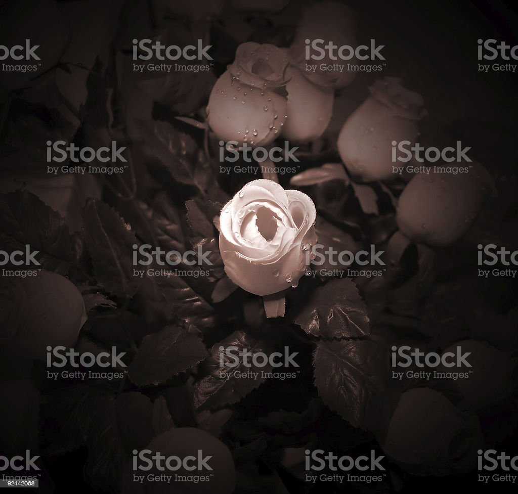 Flowers with light effect royalty-free stock photo